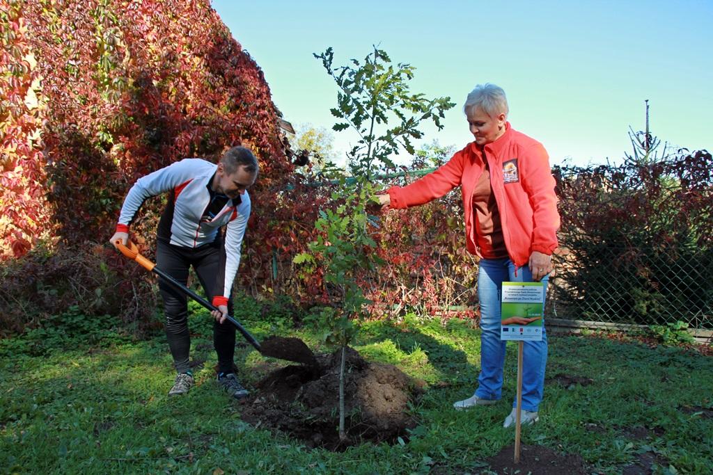 Anatol Bukała i Lilla Cwajna sadzą drzewo w Kopernikach